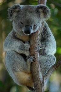 australia-699228_1280